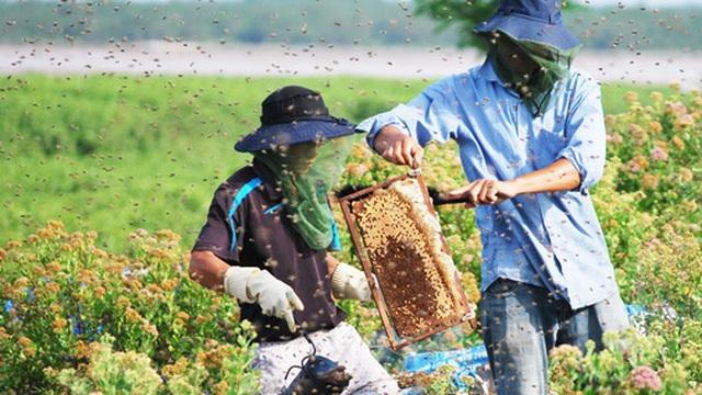 """Tạm xa Hồ Tây một hôm, về Ninh Bình thăm bác nông dân thu nhập """"khủng"""" nhờ nuôi ong lấy mật từ loài hoa ít ai ngờ tới"""