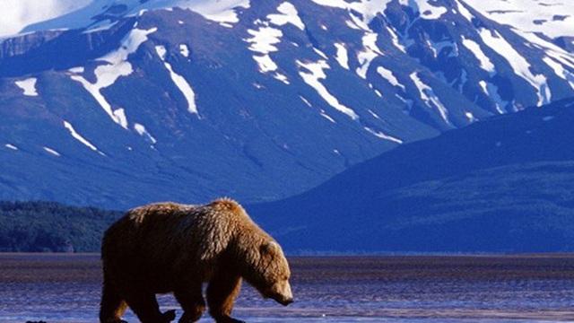 Mỹ cho khai thác dầu khí ở khu bảo tồn Bắc Cực: Có thành thảm họa môi trường?