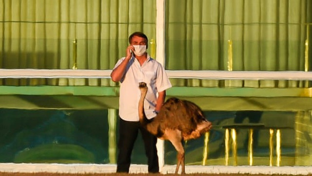 """Tổng thống Brazil bị đà điểu mổ khi đang cách ly do nhiễm COVID-19, nhiều người """"hả hê"""""""