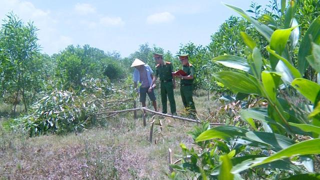 Đi chăn bò bị đe dọa, 3 người hàng xóm vác dao chặt hạ vườn keo 700 cây để trả thù