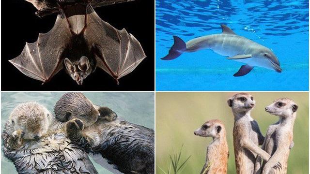 1001 thắc mắc: Loài nào vừa bay vừa ngủ?