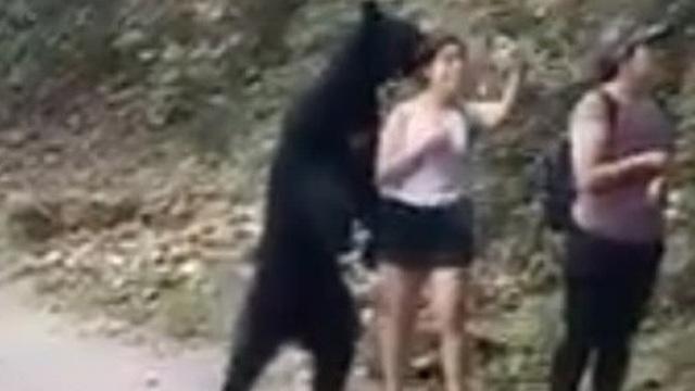 Bất ngờ bị gấu 'vồ' nhưng vẫn bình tĩnh rút điện thoại ra selfie, cô gái được khen nức nở vì thần kinh thép
