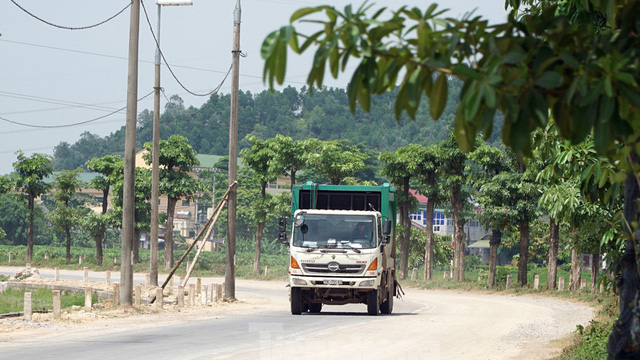 Hàng trăm cây hoa sữa sau một năm được trồng trên bãi rác Nam Sơn giờ ra sao?