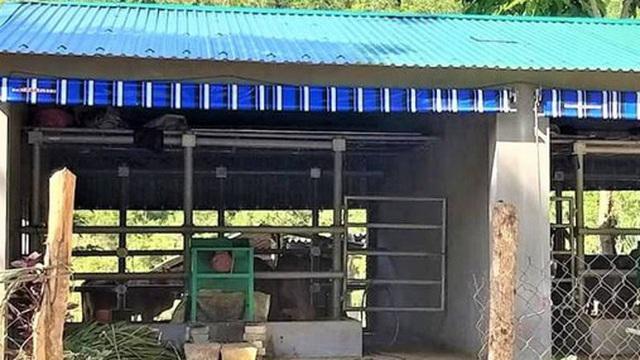 """Cận cảnh chuồng bò """"hạng sang"""", có loại giá hơn 230 triệu đồng ở Nghệ An"""