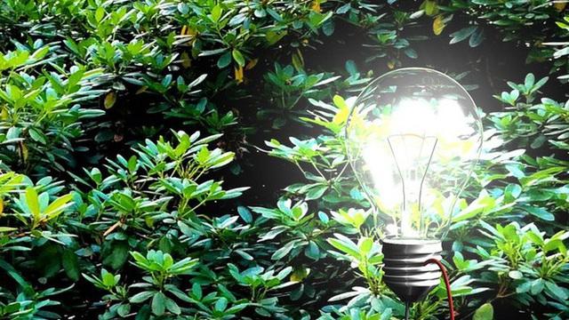 1001 thắc mắc: Vì sao trong cây có điện, sao chúng không vươn mãi lên trời?