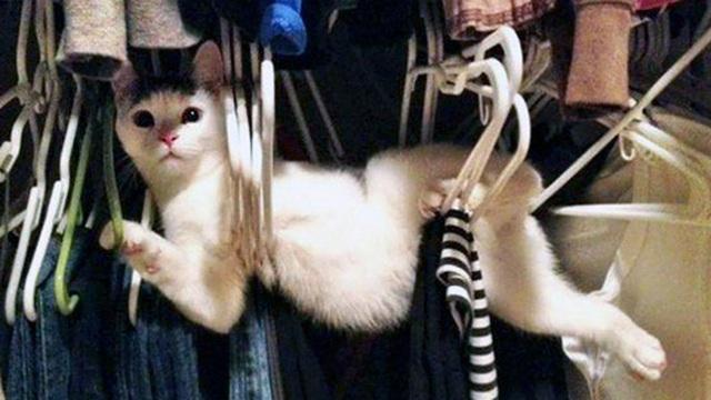 Loạt mèo ngớ ngẩn khiến bạn vừa tức vừa buồn cười