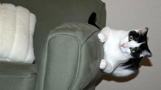 18 con mèo không thích nghe lời chủ và loạt khoảnh khắc chống lại mọi định luật vật lý