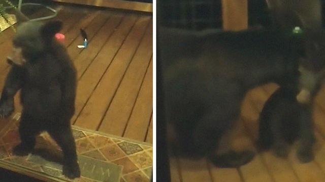 """Thấy gấu con nhòm vào cửa sổ nhà người ta, gấu mẹ """"nhắc nhở"""" tức thì và video gây bão mạng"""