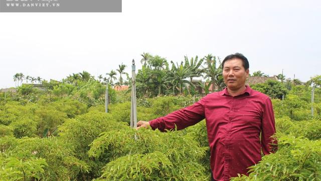"""Nam Định: Trồng hàng vạn cây """"sâm người nghèo"""" mà thành đại gia của làng"""