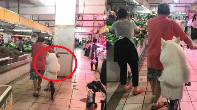 Nằng nặc đòi theo ông chủ đi chợ, chú chó phải ngồi xổm bó gối trong cái giỏ vì quá béo, dân mạng còn hùa vào trêu: Giảm cân đi cục bông ơi!
