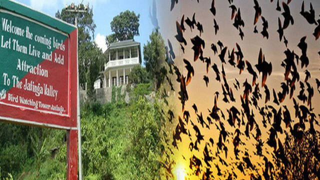 Chuyện rùng rợn về ngôi làng bí ẩn nơi có hàng ngàn con chim bay đến 'tự sát', 100 năm qua vẫn khiến nhà khoa học đau đầu đi tìm lời giải