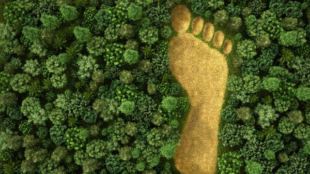 """""""Sự phát triển nóng"""" của loài người trong 50 năm qua đã làm suy giảm 2/3 quần thể động vật trên Trái Đất"""