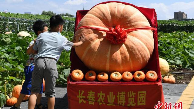 Chiêm ngưỡng quả bí ngô khổng lồ nặng đến nửa tấn