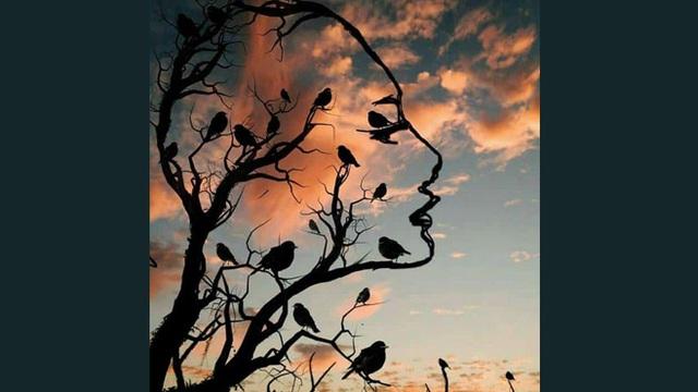 Bạn thấy hình cô gái hay đàn chim trước tiên? Chọn để biết bạn mơ mộng hay thực tế