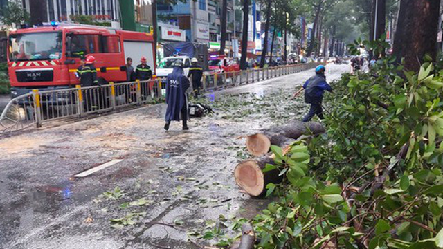 Người chết do cây ngã ở TPHCM, lộ nguyên nhân bất ngờ!