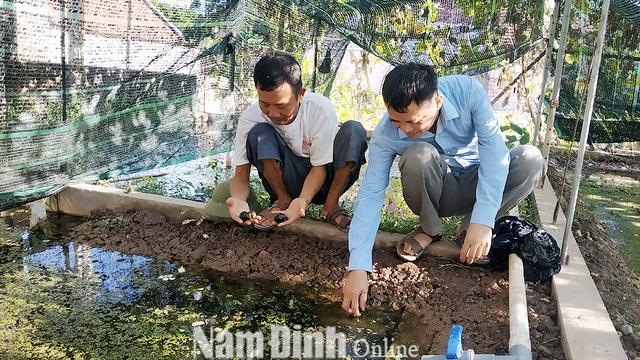 Phát triển nghề nuôi ốc nhồi