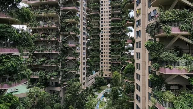 """24h qua ảnh: Cây mọc um tùm trên chung cư """"ma"""" ở Trung Quốc"""