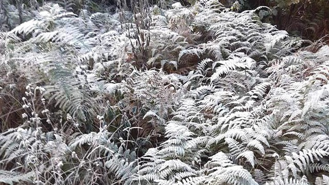 Nhiều nơi ở Nghệ An xuất hiện băng giá, cây cối, vật dụng đều bị đóng băng
