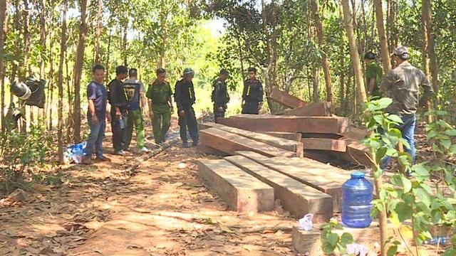 2 cán bộ quản lý rừng bị bắt vì tự ý chặt rừng bán cho người dân