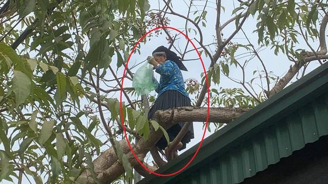 Thấy bà cụ leo trèo thoăn thoắt trên cây, cô gái tò mò hỏi tuổi thì nhận câu trả lời bất ngờ