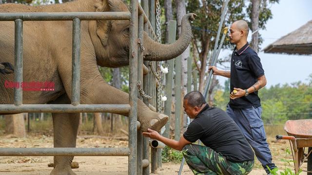 Mục kích những chú voi con hiếm hoi còn lại ở Đắk Lắk