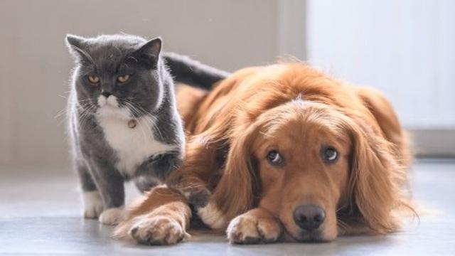 """""""Hiệu ứng đá mèo"""" rất dễ gây tai họa, đáng tiếc là mới chỉ có 1% trong chúng ta biết cách tránh, 99% còn lại đều từng mắc phải"""