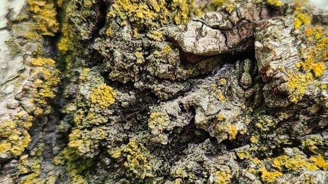 Thách thức thị giác 3 giây: Nhìn bức hình này, đố bạn tìm ra con rắn đang ẩn nấp
