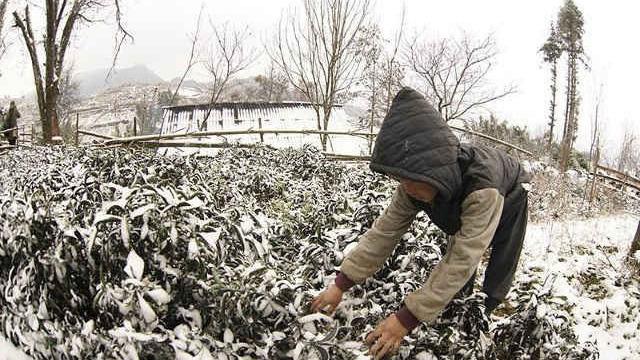 Đợt rét đậm, rét hại khả năng gây mưa tuyết, chủ động cho học sinh nghỉ học
