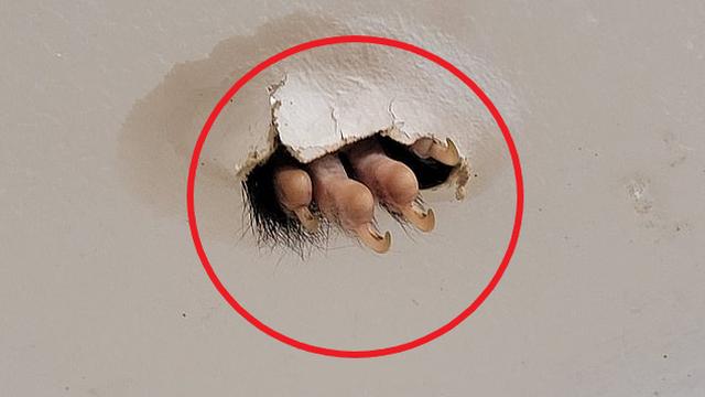 Đang ở trong phòng tắm, người phụ nữ ngước nhìn lên thì thấy 1 thứ khiến ai cũng sởn da gà
