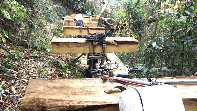 Công ty khai thác sâm Ngọc Linh liên tục để mất rừng