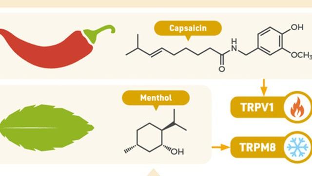 Ăn ớt thì nóng, ăn bạc hà thì mát: Giải thích được tại sao lại vậy thì bạn xứng đáng nhận giải Nobel