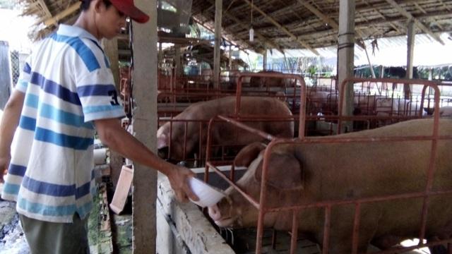 """Xuất chuồng mỗi tạ heo lỗ 2 triệu đồng, nông dân Tiền Giang """"kêu cứu"""""""
