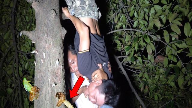 Đêm khuya, nhóm người soi đèn vào các thân cây để tìm kiếm: Kết quả bất ngờ!