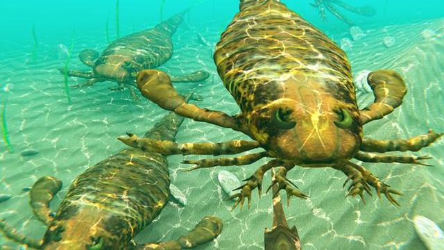 'Cỗ máy chém' sắc như dao cạo của bọ cạp khổng lồ, kích cỡ chó nhà: Thống trị đại dương vì không có đối thủ!