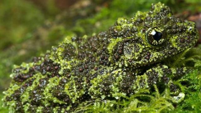 """Kinh ngạc trước khả năng ngụy trang """"siêu đẳng"""" của động vật trong tự nhiên"""
