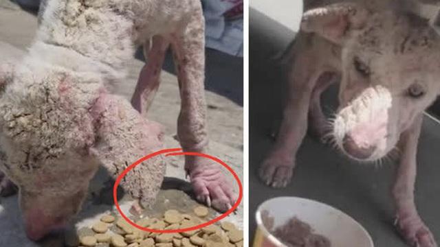 Chú chó lang thang xấu xí, toàn thân ửng đỏ vì lở loét khiến ai cũng ngỡ ngàng vì màn lột xác ngoạn mục sau khi được nhận nuôi