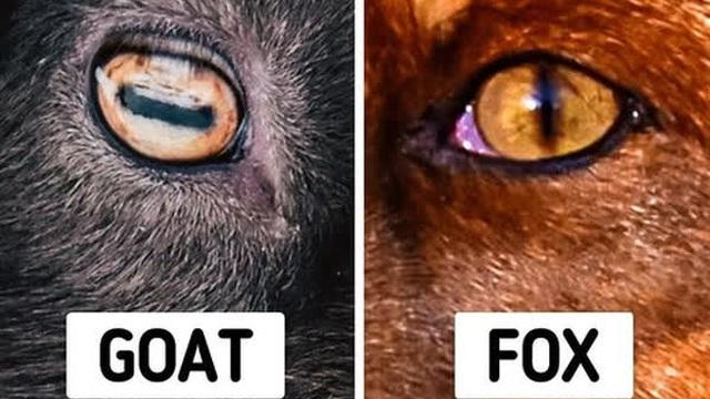 Những sự thật khó tin về các loài động vật cho chúng ta thấy mẹ thiên nhiên quả thực đã sáng tạo đến mức nào