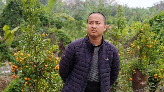 Nỗi đau sau Tết: Cây cảnh ế đầy vườn, nông dân ôm nợ
