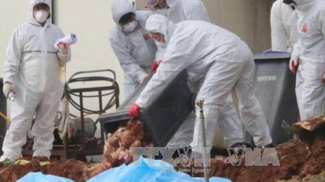 Trung Quốc phát hiện ổ dịch cúm gia cấm H5N8 mới