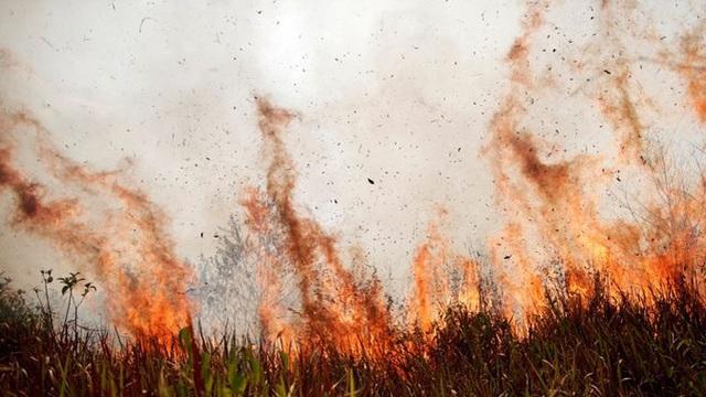 Con người đã hủy diệt thiên nhiên kinh khủng như thế này