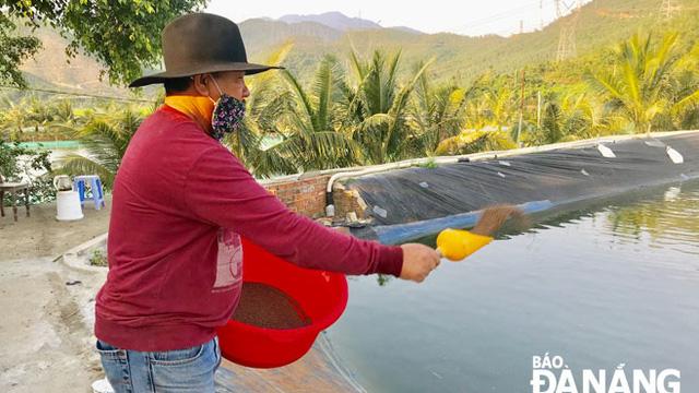 Thu tiền tỷ từ nuôi cá dìa