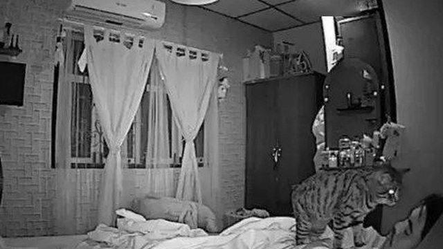Tỉnh dậy giữa đêm vì cảm thấy có điều gì đó bất thường, người đàn ông giật nảy mình khi nhìn thấy thứ này trên chăn