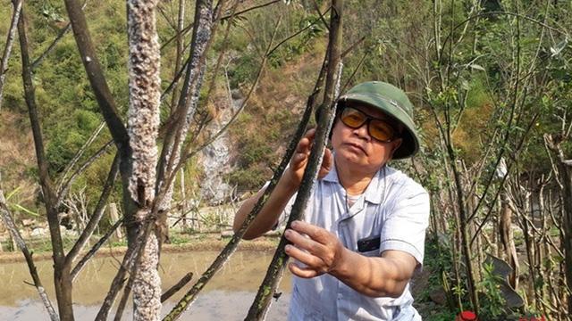 Thu nhập trăm triệu mỗi năm, người dân miền biên xứ Thanh 'đổi đời' nhờ loại côn trùng bé xíu