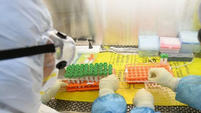 Virus cảm lạnh có thể ngăn chặn SARS-CoV-2 sao chép