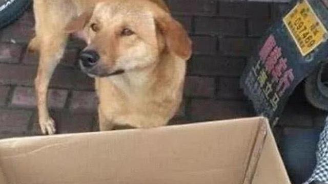 Bất ngờ gặp con, việc làm của chó mẹ khiến người đi đường rớt nước mắt, cái kết nằm ngoài dự đoán
