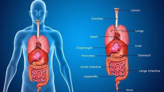 """Dấu hiệu nhận biết 5 cơ quan nội tạng bị """"bẩn"""": Hãy thử đối chiếu xem cơ thể bạn có sạch không?"""