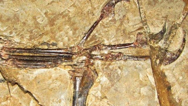 Liệu có thật sự tồn tại loài khủng long cổ đại có bàn tay giống con người?