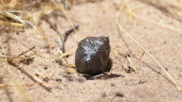 Báu vật triệu đô từ ngoài hành tinh đáp xuống sa mạc châu Phi