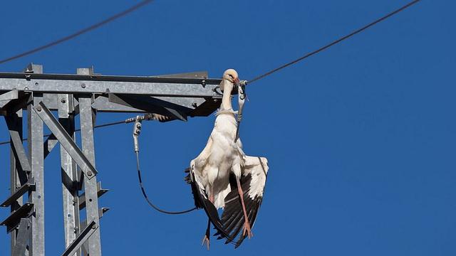 Công ty điện lực bị kiện do điện giật chết hàng trăm con chim