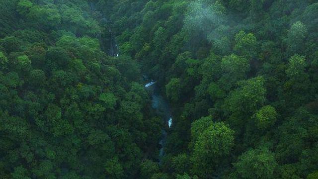"""""""Lá phổi của Trái đất"""" đang kêu cứu! Rừng nhiệt đới Amazon thải ra nhiều CO2 hơn lượng hấp thụ"""